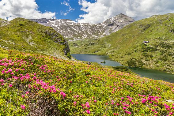 "Berglandschaft ""Alpenrosen mit Bergsee"""