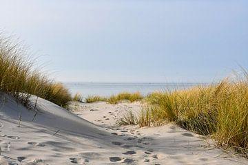 Voetstappen door de duinen