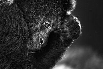 Denkender Affe von Chihong