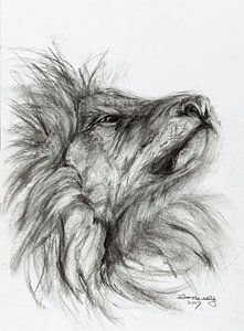 Stolzer Löwe.
