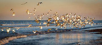 Éclat d'oiseaux au-dessus de la côte néerlandaise sur Jolanda van Straaten