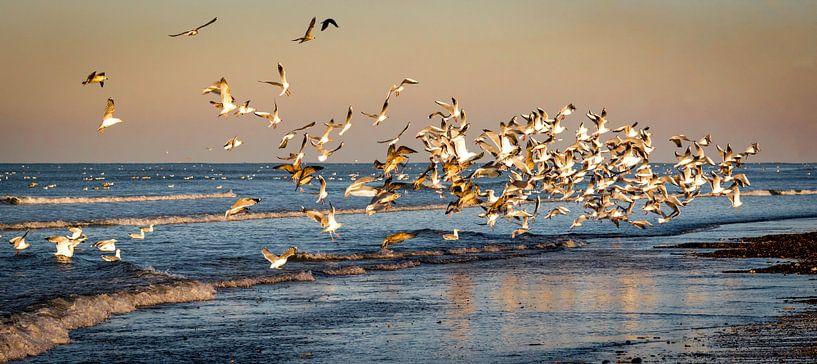 Vogelpracht van Jolanda van Straaten