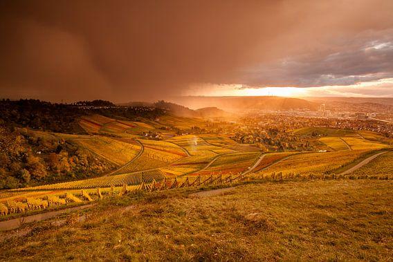 Dramatische wijngaarden in de herfst in de buurt van Rotenberg Stuttgart