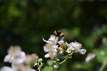 Biene im Honigtopf von Michael van Eijk