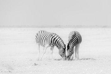 Zwei Zebras auf einer endlosen leeren Ebene von Adri Klaassen
