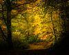 Het gouden herfstlicht van Nando Harmsen thumbnail