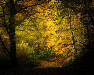 Das goldene Herbstlicht von Nando Harmsen