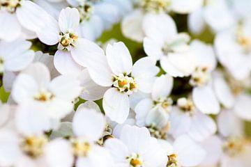 Its a flower thing von