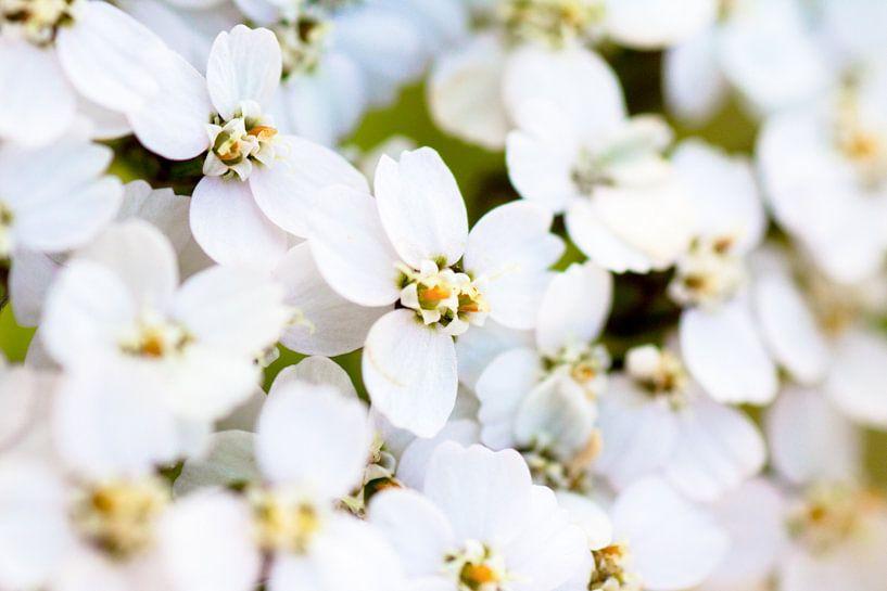 Its a flower thing van Ramon Bovenlander