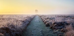 Panorama of solitary tree in frozen heather at sunrise (horizontal).