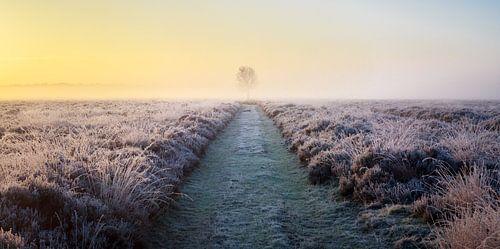 Panorama of solitary tree in frozen heather at sunrise (horizontal). von Luis Fernando Valdés Villarreal Boullosa