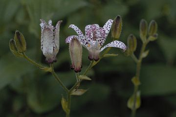 Planten 19