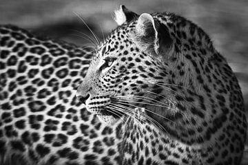 Leopard aus der Nähe in Schwarz & Weiß von YvePhotography