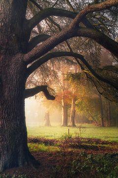 Veranderende kleuren van Joris Pannemans - Loris Photography