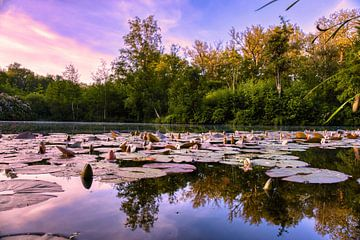 Der Teich in der Morgendämmerung von Joran Quinten