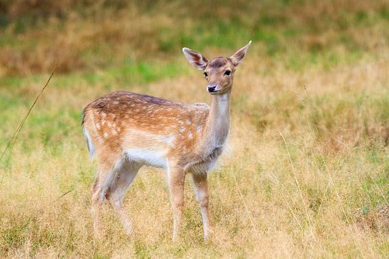 Bambi van Dennis van de Water