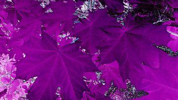 Blätter lila von Jenny Heß