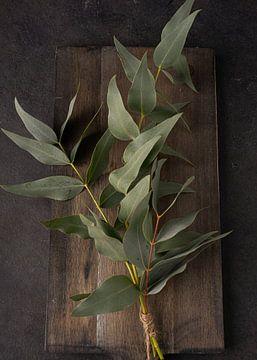 Eukalyptus von simone swart