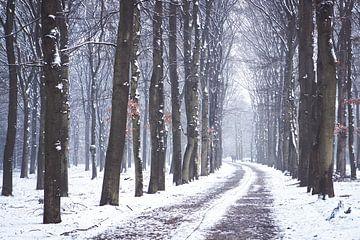 L'hiver sur l'Utrechtse Heuvelrug ! sur Peter Haastrecht, van
