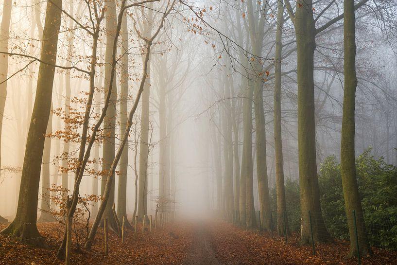 Foggy Woods van Philippe Velghe