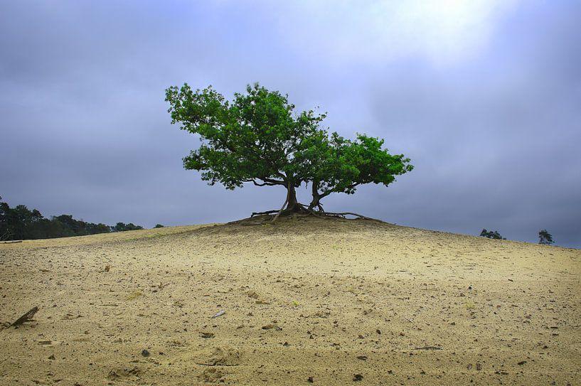 mysterieuze boom van Jan Brand