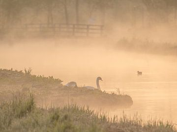 Schwan in Polderlandschaft von Karen de Geus
