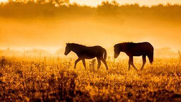 Paardjes in de mist bij vroege morgen van Jan Linskens