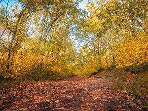 Een wandelpad in het bos van Martijn Tilroe