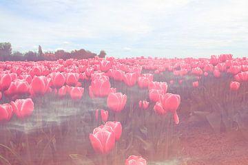 veld met rode tulpen van Pauli Langbein