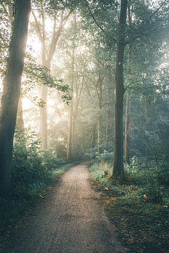 Zauberwald von Emma Pille