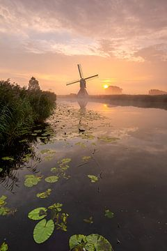 Le moulin d'Oudendijk en mode deuil