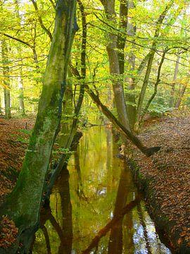 Herfst bij de Leuvenumse beek van Corinne Welp