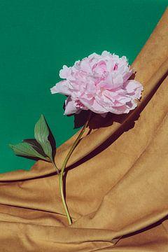 Pioenroos op velours en groen van Emilia Aivazian Fotografie