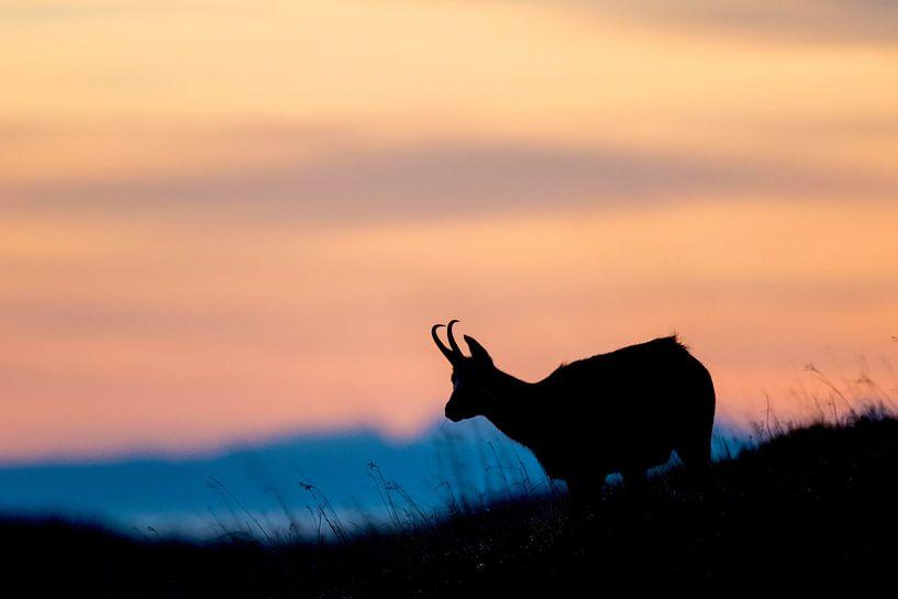 Zonsondergang in de Vogezen van Sam Mannaerts Natuurfotografie