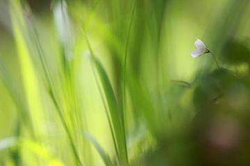 In het bos van Jana Behr