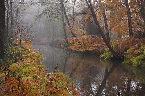 Herfst in Parklandschap De Overtuinen in Oranjewoud van