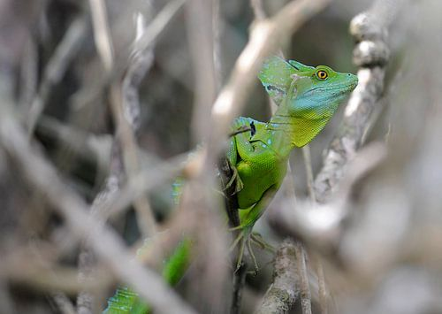 Costa Rica van