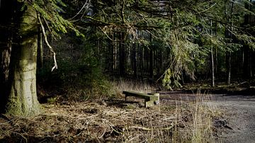 Bankje in het bos van Esmée Kiezebrink