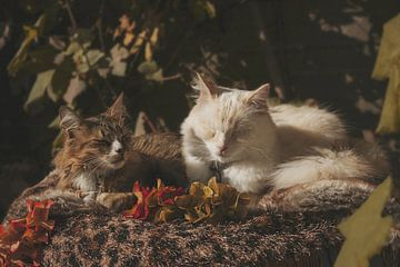 Autumn cats van Ivana Luijten