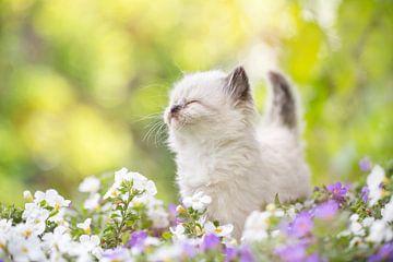 Kitten van Leora Kalisvaart