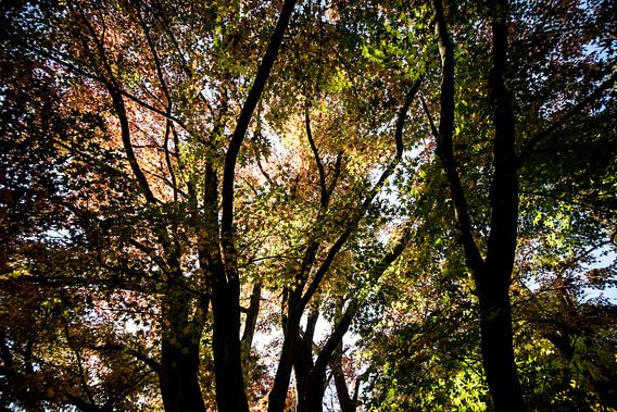 Boomtoppen in de herfst