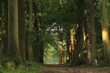 Rijsterbos - Bos- Friesland van Fotografie Sybrandy