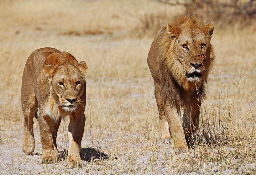 Two lions - Africa wildlife van W. Woyke