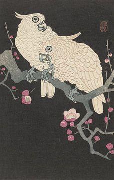 Zwei Kakadus und Pflaumenblüte aus Ohara Koson