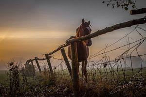 paard sur Jacky Schoonbaert