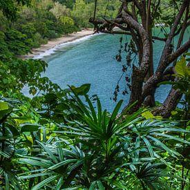 Tropisch gevoel van Joran Quinten