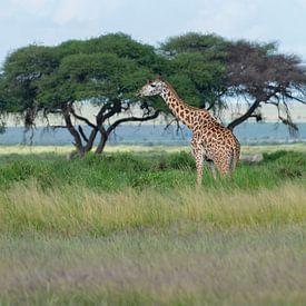 Girafe Masaï sur Alexander Schulz
