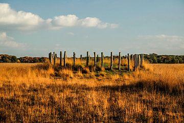 Grafheuvels op de Regte Heide van Susan van der Riet