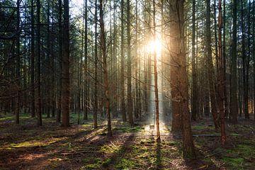 Mysterieus licht in het Speulderbos in de herfst von Dennis van de Water