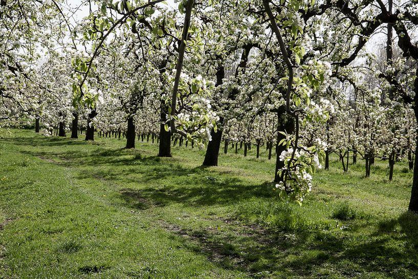 Bloeiende boomgaard van Jim van Iterson